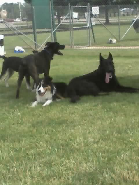 Nash, Diesel, Kye, and Chaos